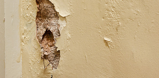 your perth based wall repair experts